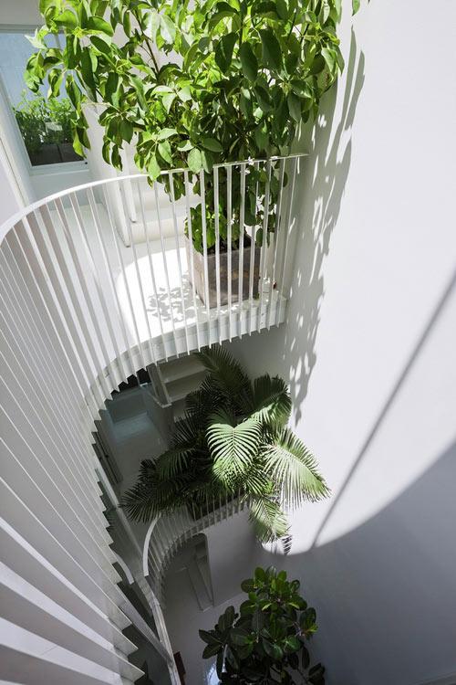 Bí quyết tạo không gian xanh lý tưởng cho nhà ống ở đô thị