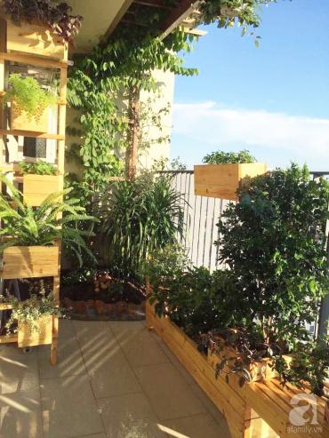 Vòng quanh Hà Nội ngắm những ban công nhỏ trồng cây trong khung gỗ đẹp mê mẩn