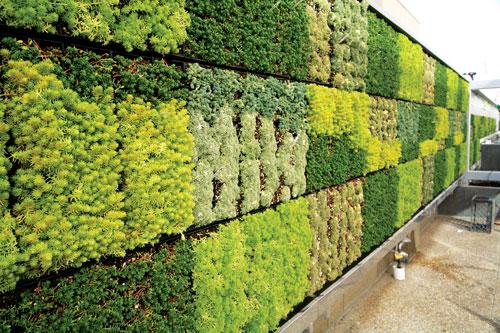 Xu hướng sử dụng tường cỏ nhân tạo hiện nay