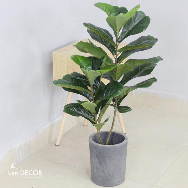 cây bàng singapore nhân tạo