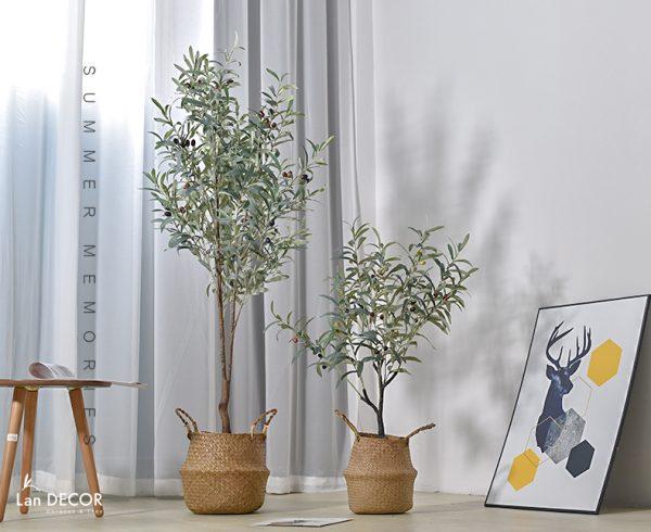 cây oliu giả tphcm