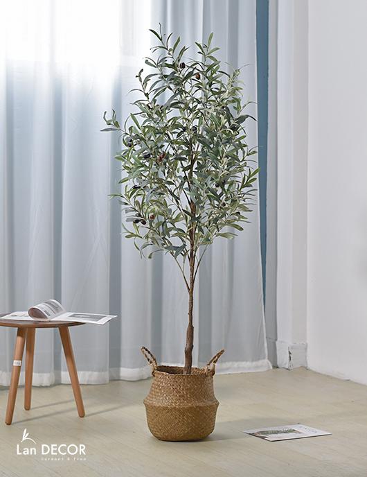 cây oliu giả