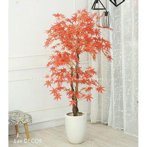 Cây phong lá đỏ 165cm – LC2787