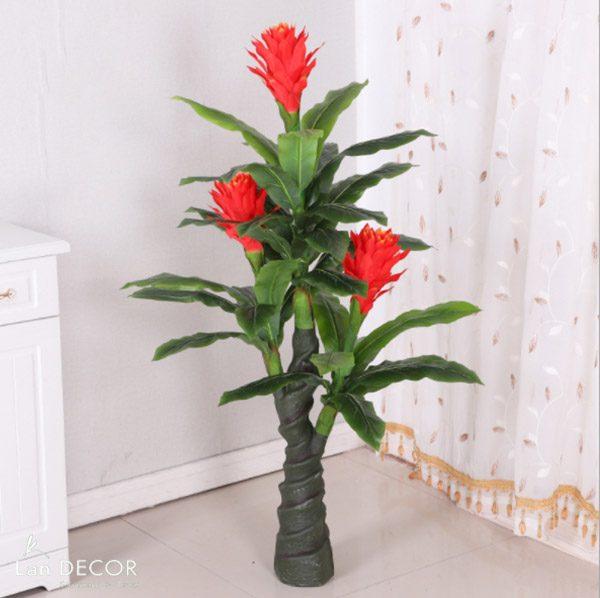 cây phát lộc hoa